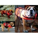 Gilet de sauvetage pour petit chien